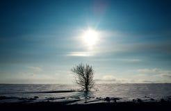 Albero solo in neve fotografia stock libera da diritti
