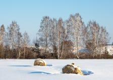 Albero solo in neve fotografia stock