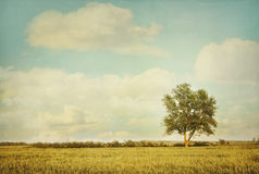 Albero solo in prato con lo sguardo dell'annata Fotografia Stock Libera da Diritti
