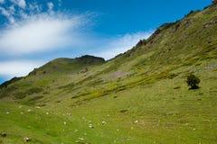 Albero solo in Pyrenees spagnoli Fotografia Stock