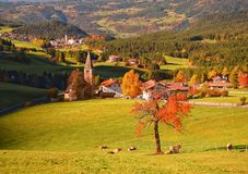 Albero solo rosso in valle dell'alpe con i villaggi tradizionali del Tirolo su fondo Fotografia Stock Libera da Diritti