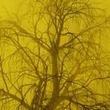 Albero solo senza foglie in nebbia o foschia accesa dai raggi arancio luminosi del dio di sole illustrazione 3D Viaggio ed accamp fotografia stock libera da diritti