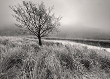 Albero solo su Frosty Morning in mono Fotografie Stock Libere da Diritti