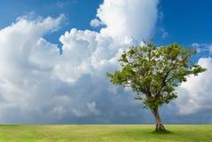 Albero solo su terra in cielo nuvoloso Fotografie Stock Libere da Diritti