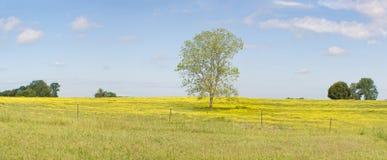 Albero solo su una collina dei wildflowers Immagine Stock