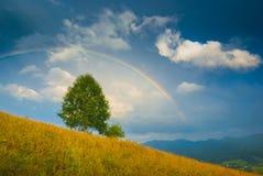 Albero solo su una collina gialla Fotografie Stock
