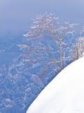Albero solo su una scogliera nevosa, montagna Vogel, alpi slovene Immagini Stock