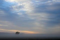 Albero solo sul campo di grano ad alba, Argentina Fotografia Stock