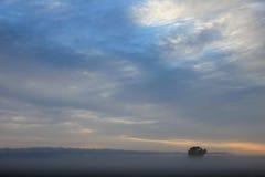 Albero solo sul campo di grano ad alba, Argentina Fotografia Stock Libera da Diritti