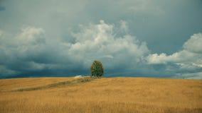 Albero solo sul campo prima di pioggia archivi video