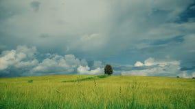 Albero solo sul campo prima di pioggia stock footage