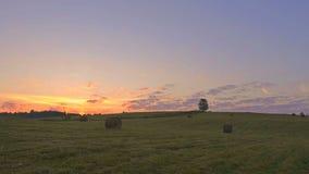 Albero solo sul campo verde contro il fondo di tramonto video d archivio