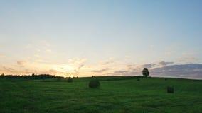Albero solo sul campo verde contro il fondo di tramonto archivi video