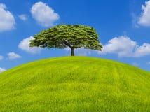 Albero solo sul campo verde su cielo blu Immagine Stock