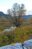 Albero solo sul fiume Fotografie Stock Libere da Diritti