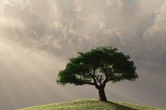 Albero solo sul pendio di collina Fotografia Stock