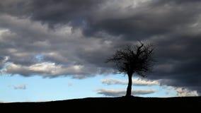 Albero solo sulla cima della siluetta della collina Fotografia Stock