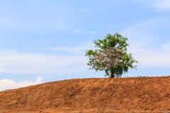 Albero solo sulla collina Fotografia Stock Libera da Diritti