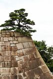 Albero solo sulla parete di pietra Fotografia Stock Libera da Diritti