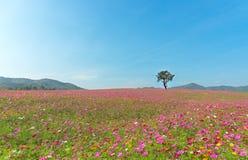 Albero solo sulla piantagione e sul prato dell'universo Fotografia Stock