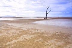 Albero solo sulla spiaggia sabbiosa Fotografie Stock Libere da Diritti
