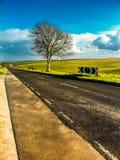 Albero solo sulla strada lungo il campo Fotografia Stock