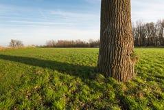 Albero solo in un'area dell'erba verde dalla fine Fotografia Stock