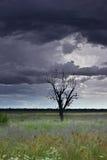 Albero solo in un campo con un cielo tempestoso Fotografia Stock