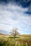 Albero solo in un campo di erba Fotografia Stock
