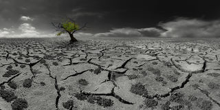 Albero solo in un paesaggio post-apocalittico del deserto Fotografia Stock Libera da Diritti