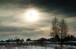 Albero solo in una sera nevosa di inverno Fotografia Stock Libera da Diritti