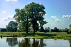 Albero sopra il fiume fotografie stock