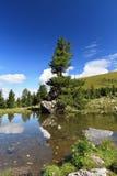 Albero sopra il lago Fotografia Stock