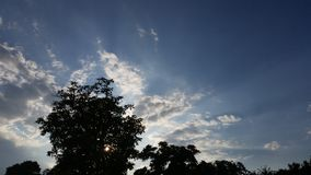 Albero sopra il sole Immagini Stock Libere da Diritti