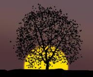 Albero sopra il tramonto Fotografie Stock Libere da Diritti