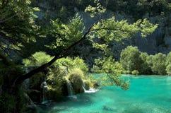 Albero sopra la cascata dell'acqua Fotografie Stock Libere da Diritti
