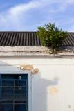 Albero sopra la costruzione Fotografie Stock Libere da Diritti