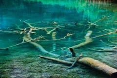 Albero sotto acqua Immagine Stock Libera da Diritti