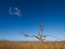 Albero sotto cielo blu Fotografia Stock