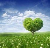 Albero sotto forma di cuore, fondo di giorno di biglietti di S. Valentino Fotografie Stock Libere da Diritti