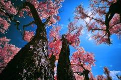 albero sotto il sole Fotografia Stock Libera da Diritti