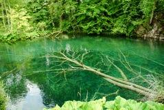 Albero sotto l'acqua Fotografia Stock