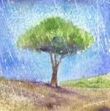 Albero sotto l'pioggia-Acquerello Immagini Stock