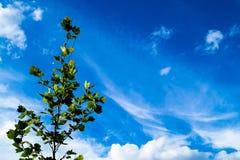 Albero sotto un cielo blu con le nuvole Fotografia Stock Libera da Diritti