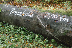 Albero spaccato nella foresta pronta ad essere venduto sotto il nome di legna da ardere Fotografie Stock