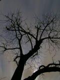 Albero spaventoso alla notte immagine stock libera da diritti