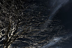 Albero spettrale fotografia stock