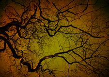 Albero spettrale alla notte Fotografia Stock