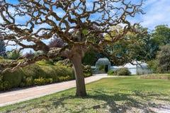 Albero splendido nel giardino reale di Laeken Immagine Stock