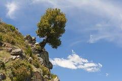 Albero sporgentesi sulla roccia Immagine Stock Libera da Diritti